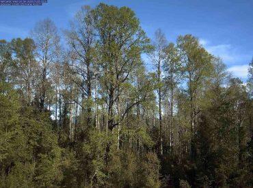 Infor monitorea con cámaras el comportamiento y sobrevivencia de los bosques de roble en la Región de Los Ríos