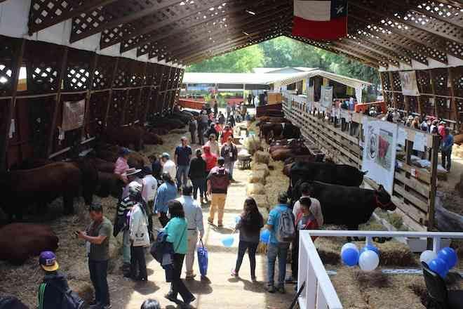 Hoy comienza ExpoSofo, la Feria Agrotecnológica, Ganadera, Industrial y Comercial más grande del sur de Chile