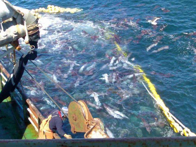 """Pescadores artesanales de Los Ríos se oponen a cierre de registro pesquero para la jibia impulsado por Subpesca: """"No estamos representados en esta consulta"""""""
