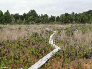 Turberas: la necesidad de proteger estos singulares humedales para que ayuden a mitigar la crisis climática