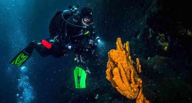 Estudio científico revela que las esponjas antárticas tienen la capacidad de resistir al cambio climático