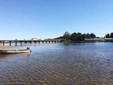 En Chiloé estudian una de las pocas anémonas de estuario presentes en el mundo
