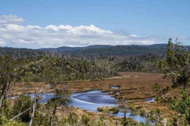 Aprueban declaratoria de Santuario de la Naturaleza para Humedales de la Cuenca de Chepu: más de 350 especies serán protegidas en Chiloé