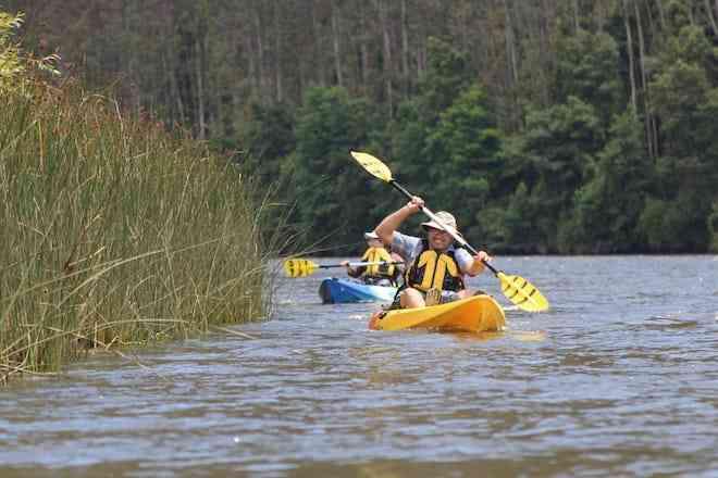 Ciencia ciudadana: navegando por el río Cruces en busca del hullín