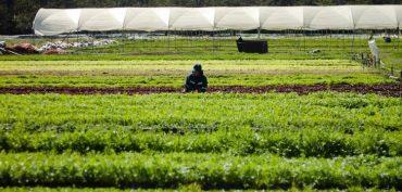 Feria Laboral Agrícola 2019 ofrecerá más de tres mil cupos de empleo en Osorno