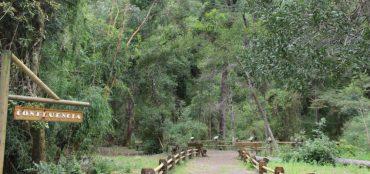Reserva Nonguén de Concepción pasará a ser Parque Nacional