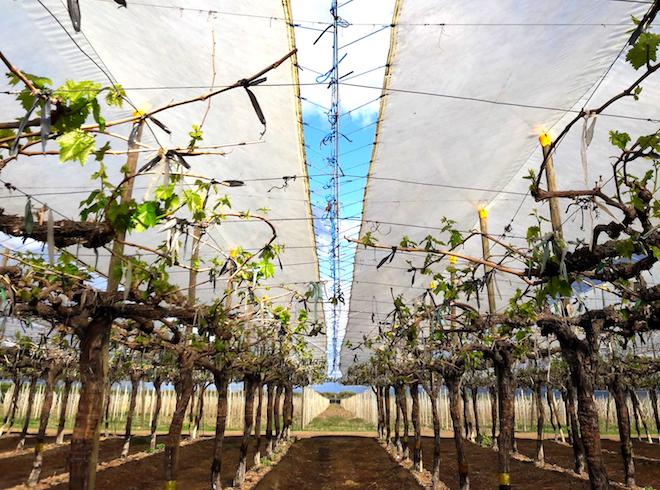 """Gerente general de Synopsys en Chile, Víctor Grimblatt:""""Le exigimos al agro lo que hoy no puede dar y desde ahí surge la necesidad del uso de la tecnología"""""""