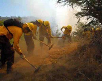 A pesar de la lluvia seremi de Agricultura llama a mantener medidas de prevención de incendios forestales