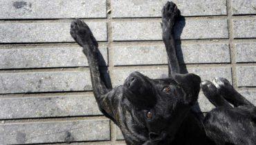 """Registro de mascotas y preocupación por los """"perros vagos"""" crece en el Gran Concepción"""