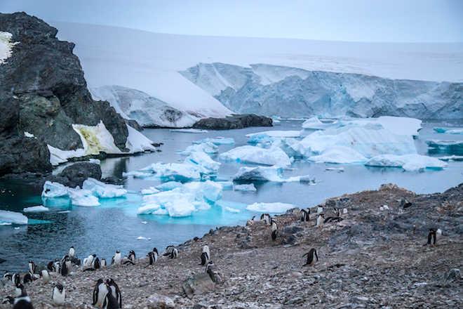 Detectan nuevos virus en pingüinos en un amplio sector de la Antártica