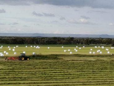 Magallanes cuenta con $600 millones para recuperar sus suelos de uso agropecuario