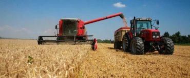 Comenzó la compra de trigo por parte de Cotrisa a pequeños y medianos agricultores de La Araucanía
