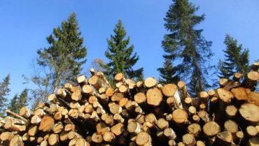 Mesa Forestal Aysén: comprometen acuerdos en materia de arriendos y concesiones con representantes del sector