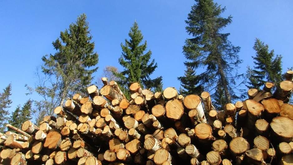 Programa de reactivación económica para pequeños y medianos propietarios forestales fue presentado en Arauco