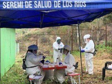 Seremi de Salud de Los Ríos informó el fallecimiento de joven por hantavirus