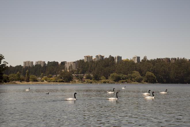 Fiscalizan Laguna Grande de San Pedro de La Paz en bote con motor eléctrico