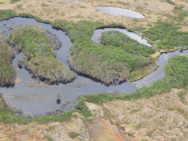 Resaltan la importancia de controlar la invasión del castor para combatir los efectos del cambio climático