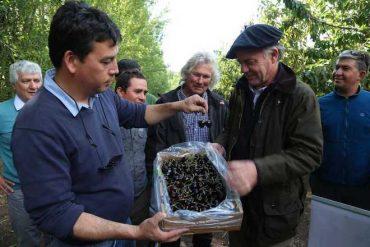 Ministro Walker se reúne con un grupo de productores cereceros de Chile Chico y les transmite calma respecto al envío de cerezas a China