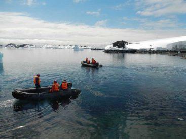 Hallazgo científico: detectan presencia de quilmahues en la Península Antártica