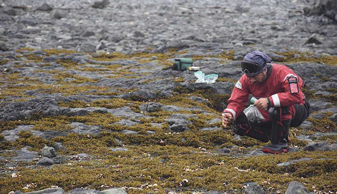 ¿Sensores o lapas? estos son los novedosos dispositivos que midieron la temperatura de los océanos desde Canadá a la Antártica