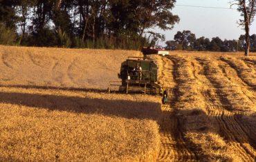 """Consorcio Agrícola del Sur sobre reavalúos a predios agrícolas anunciados por el SII: """"Es una medida desproporcionado y sin precedentes"""""""