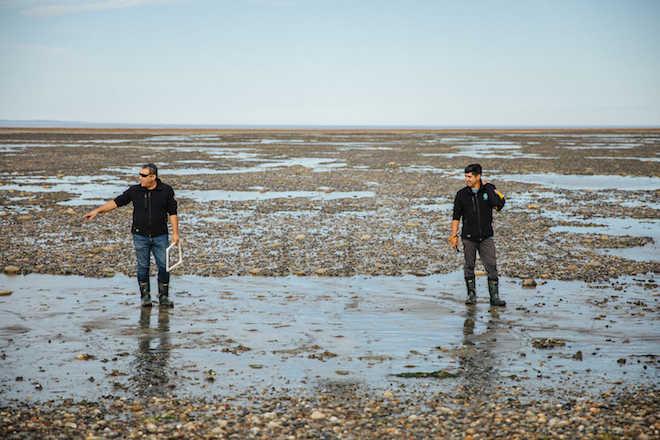 """Los """"bosques fantasmas"""" de la Patagonia, un ecosistema marino único en el fin del mundo"""