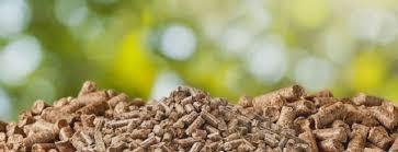 Nutrición y dietética UST sede Valdivia desarrolla innovador proyecto de valorización de residuos orgánicos