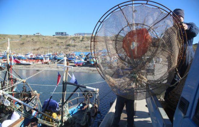 Científicos investigarán la explotación ecosistémica de la centolla en Magallanes