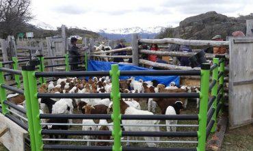 Emprendimiento del sur de Chile transforma residuos plásticos agrícolas en corrales