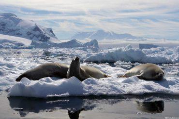 Krill en problemas: se desplazará hacia zonas oceánicas y el sur de la Antártica por cambio climático