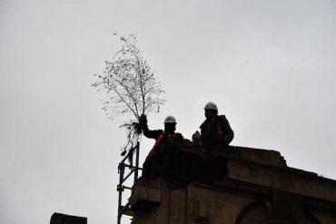 Rescatan abedul que creció en la fachada del Mercado Municipal de Temuco y resistió incendio