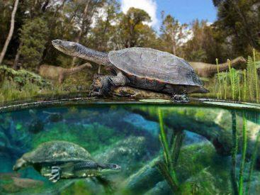 Hallan fósiles de tortugas de agua dulce de 75 millones de años en la Patagonia chilena