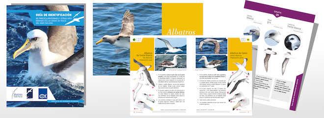Desarrollan Guía de identificación de aves marinas en las zonas de pesca del mar chileno