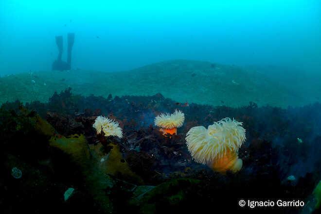 Derretimiento de glaciares podría cambiar y disminuir la biodiversidad marina antártica