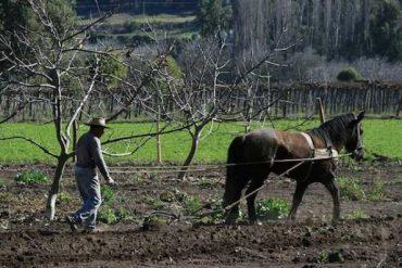 Concurso Historias de Nuestra Tierra integra categoría de fotografía para mostrar la cultura rural