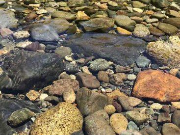 ¡Un siglo! tiempo en que no se sabía de un antiguo bagre en los ríos costeros de América del Sur