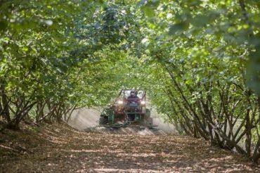 Convenio público-privado beneficiará a pequeños productores de avellana europea de La Araucanía