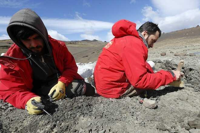Magallanodon baikashkenke: el mamífero fósil más antiguo de Chile fue descubierto en la comuna de Torres del Paine