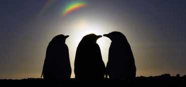 Solsticio de invierno 2020: Instituto Antártico Chileno celebrará la noche más larga del año con una travesía audible