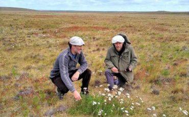 Agricultura en zonas extremas: investigan adaptabilidad de la alfalfa en La Patagonia