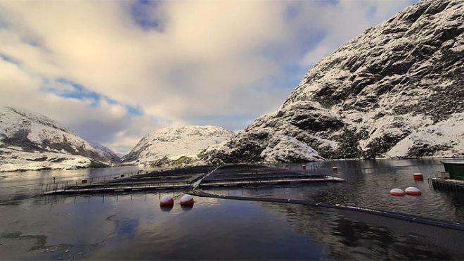 Desde la Región de Aysén se exportaron salmones y truchas por 57,2 millones de dólares