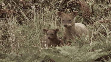Caza furtiva en Villarrica: seremi de Agricultura denuncia al Ministerio Público muerte de animales en peligro de extinción