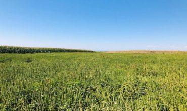 Proyecto agrícola apuesta por la producción de aceites Omega 3 en Chile