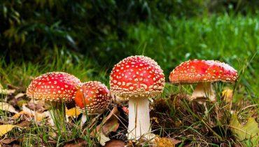 Académicos publican inventario de especies introducidas que se han naturalizado en Chile
