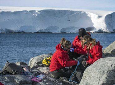 Investigación genómica sobre los pingüinos situó su origen en Nueva Zelandia y Australia