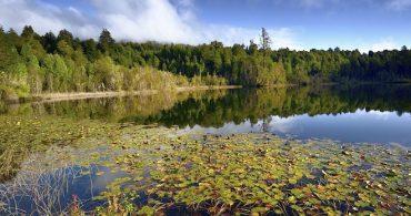 Corte Suprema ordena someter a consulta de pueblos originarios proyecto de deslindes de Parque Nacional Puyehue