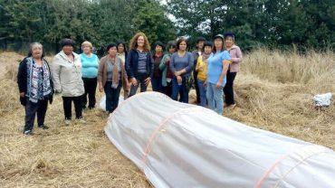 Grupos de Transferencia Tecnológica mapuches reciben asesoría a través de podcast y WhatsApp en la Región de Los Lagos