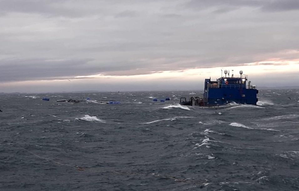 Consejero Roberto Soto solicita información actualizada sobre escape de salmones en Caicura