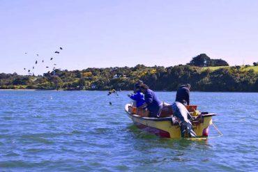 Proyecto de repoblamiento sembró primeras semillas de ostra chilena en Ancud