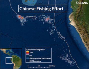 Oceana analiza la ruta de flota pesquera china que depredó Galápagos y advierte que se dirige a Chile